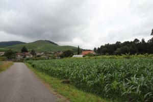 Кукурузные поля Португалии